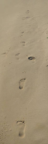 Photograph - Sand Footprints by Maggy Marsh