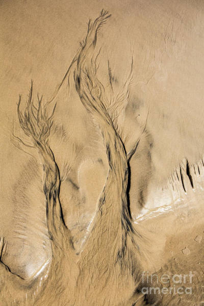 Wall Art - Photograph - Sand Trees by Sheila Smart Fine Art Photography
