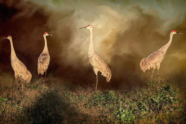 Wall Art - Photograph - Sandhill Crane Family by Donna Kennedy