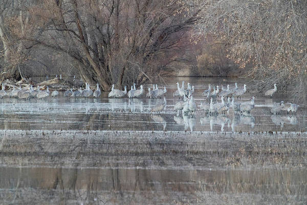 Wall Art - Photograph - Sandhill Cranes At Waters Edge by Darrell Gulin