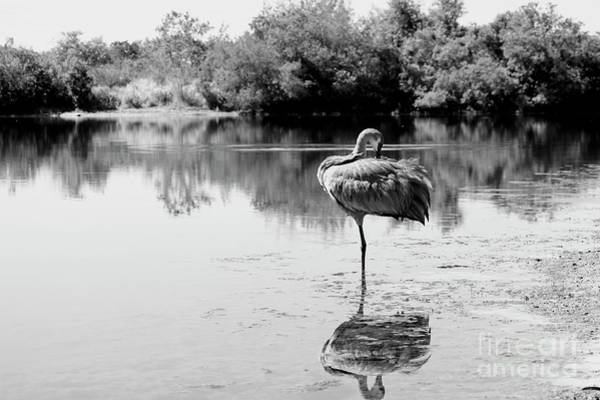 Wall Art - Photograph - Sandhill Solitude In Black And White by Carol Groenen