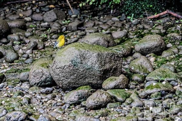 Wall Art - Photograph - Warbler 4975t by Doug Berry