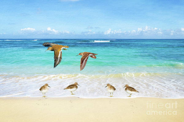 Wall Art - Photograph - Sandpiper Party by Laura D Young
