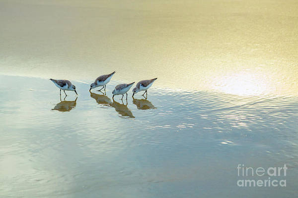 Wall Art - Photograph - Sandpipers At La Jolla Shores Beach, La Jolla, California by Julia Hiebaum