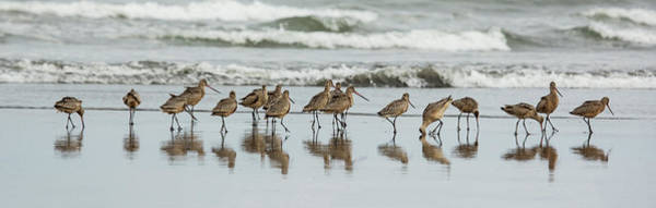 Photograph - Sandpipers Piping by Bob Cournoyer