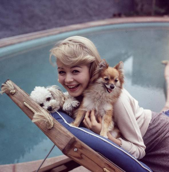 Poodle Photograph - Sandra Dee by Hulton Archive