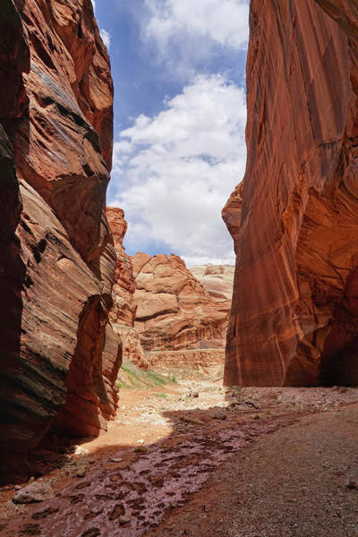 Photograph - Sandstone Giants by Leda Robertson