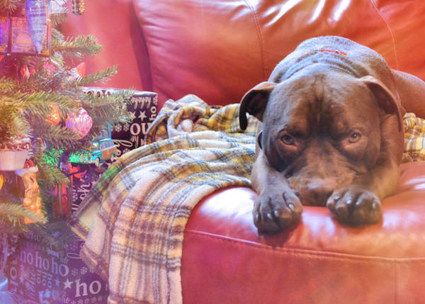 Photograph - Santa Puppy Paws by JAMART Photography