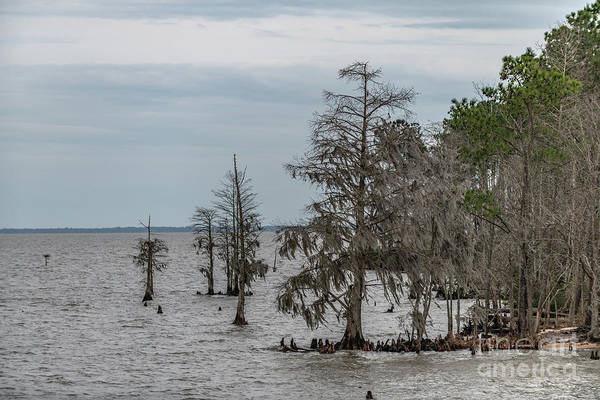 Photograph - Santee Lake Moultrie - Berkeley Country by Dale Powell