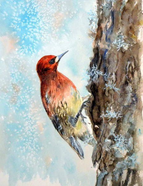 Painting - Sapsucker by Anna Jacke