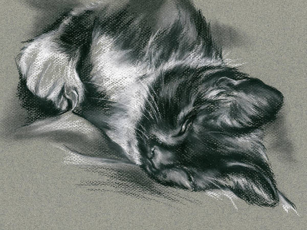 Drawing - Sassy Samantha The Tuxedo Cat by MM Anderson