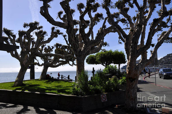 Wall Art - Photograph - Sausalito 16 by Andrew Dinh