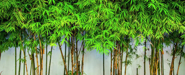 Wall Art - Photograph - Save Our Earth With Bamboo by Simonlong