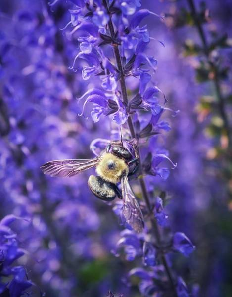 Photograph - Save The Bees by Shannon Kelly
