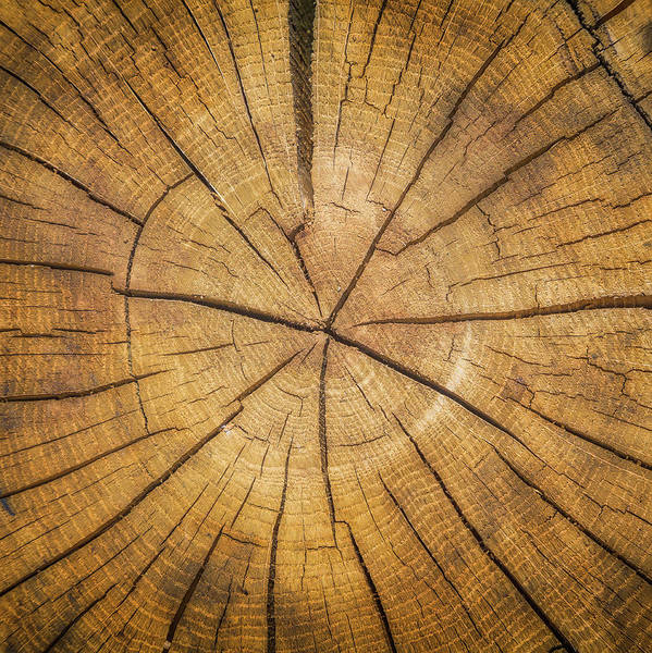 tree-ring dating