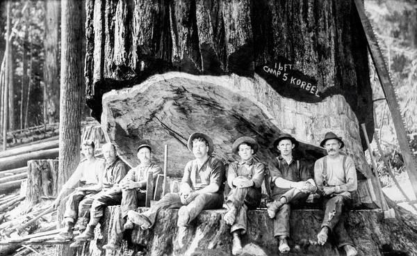 Wall Art - Photograph - Saws, Axes, Sledges And Lumberjacks C. 1879 by Daniel Hagerman