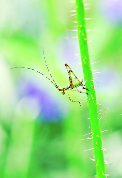 Say Hello To My Little Green Insect Friend Art Print