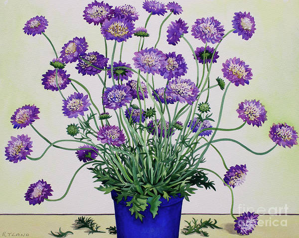 Wall Art - Painting - Scabious by Christopher Ryland