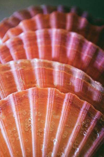Wall Art - Photograph - Scallop Shells Group 2 by Carlos Caetano