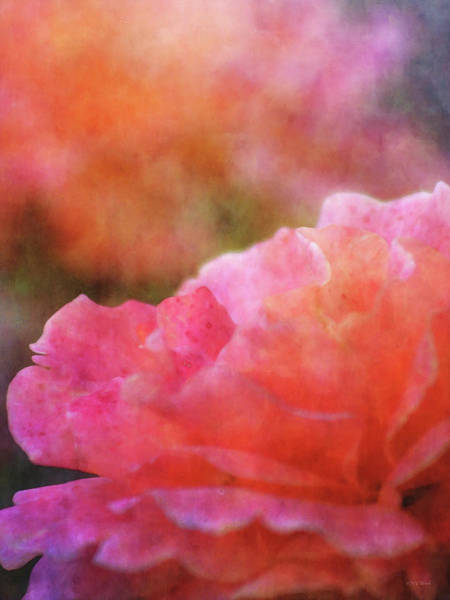 Photograph - Scalloped 5512 Idp_2 by Steven Ward