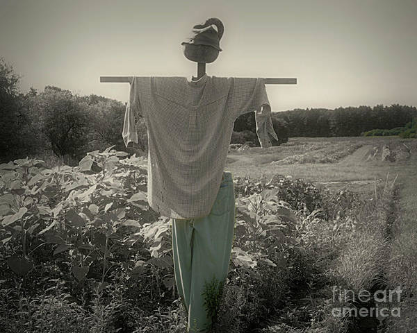 Photograph - Scarecrow by Smilin Eyes  Treasures