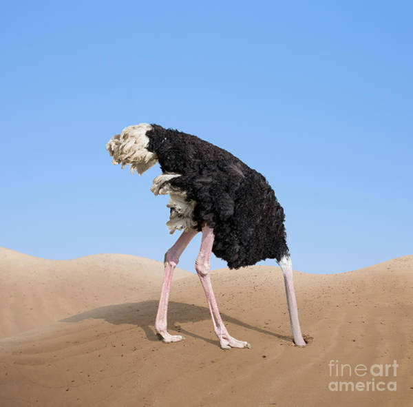 Wall Art - Photograph - Scared Ostrich Burying Its Head In Sand by Andrey kuzmin