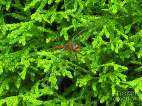 Photograph - Scarlet Darter Male Dragonfly by Rockin Docks