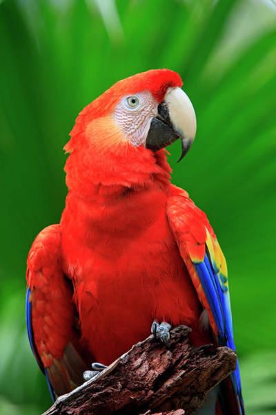 Wall Art - Photograph - Scarlet Macaw by Tier Und Naturfotografie J Und C Sohns