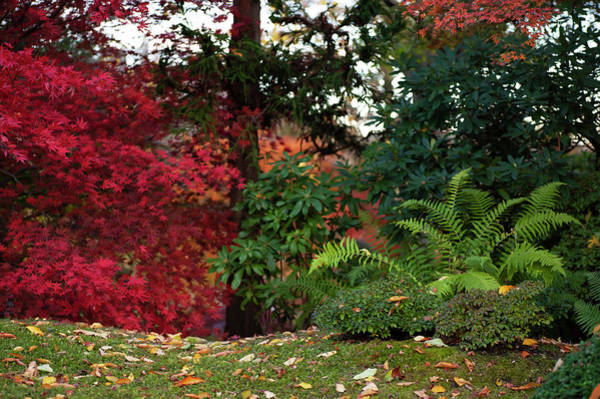 Photograph - Scarlet Red And Emerald Green In Japanese Garden 1 by Jenny Rainbow