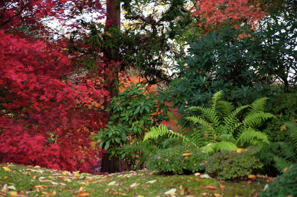 Photograph - Scarlet Red And Emerald Green In Japanese Garden by Jenny Rainbow