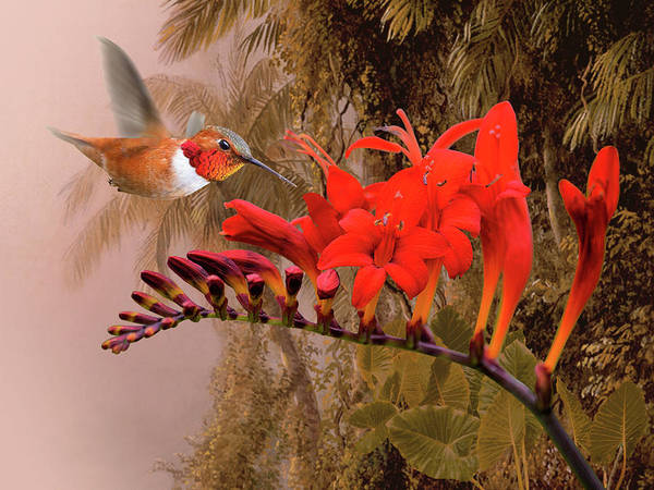 Wall Art - Digital Art - Scarlet Sage And Hummingbird by M Spadecaller