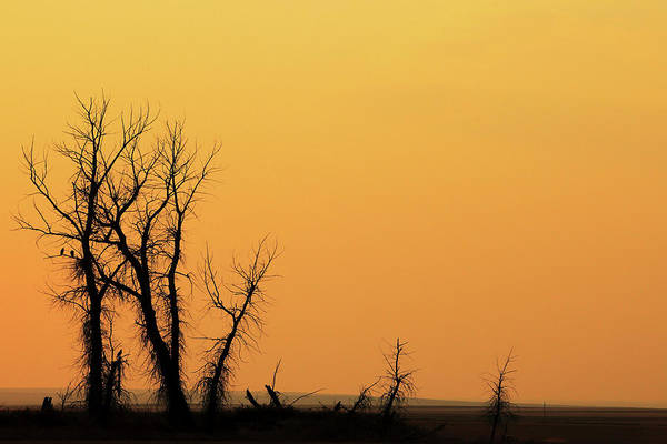 Photograph - Scary Trees by Todd Klassy