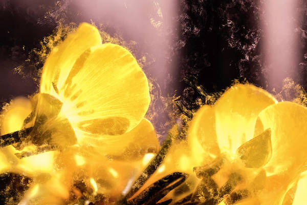 Wall Art - Photograph - Scattered Buttercups by Jim Love