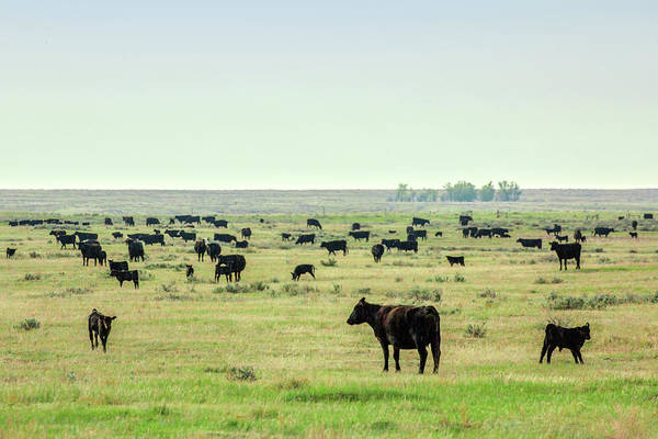 Wall Art - Photograph - Scattered Herd by Todd Klassy