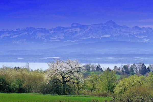 Wall Art - Photograph - Scenery At Lake Constance With Cherry by Heinz Wohner / Look-foto