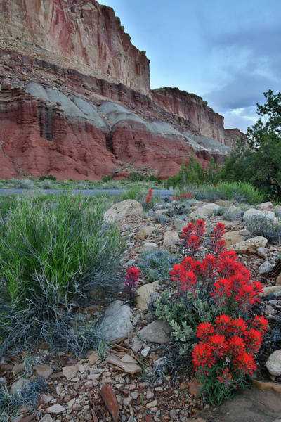 Photograph - Scenic Drive Paintbrush In Capitol Reef by Ray Mathis