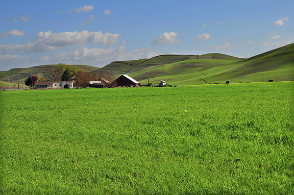 Livermore Wall Art - Photograph - Scenic Green Countryside by Mitch Diamond