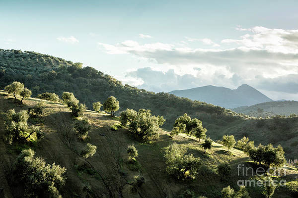 Wall Art - Photograph - Scenic Ridge In Andalucia by Timothy Hacker