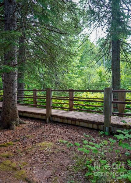 Photograph - Scenic Walking Trail Along Gooseberry River by Susan Rydberg