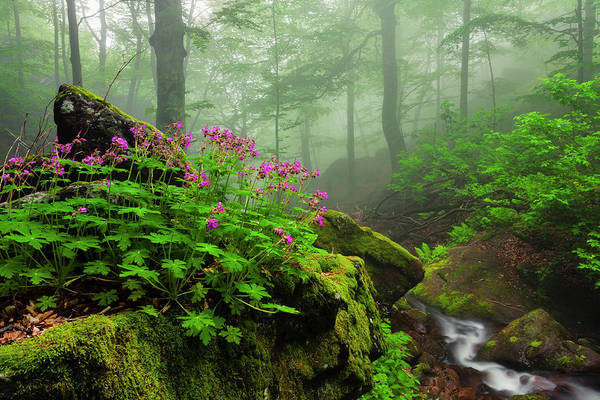 Geranium Wall Art - Photograph - Scent Of Spring by Evgeni Dinev