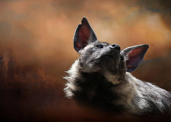 Photograph - Scenting The Air - Striped Hyena by Debi Dalio