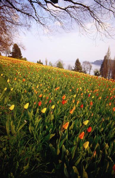 Duke University Photograph - Schloss Gardens On Mainau, Once by David Peevers