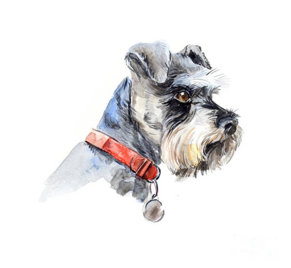 Wall Art - Digital Art - Schnauzer. Portrait Of A Dog. Set With by Marya Kutuzova