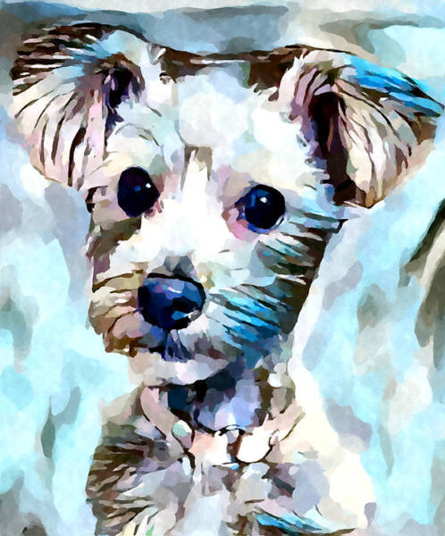 Wall Art - Painting - Schnoodle 3 by Chris Butler