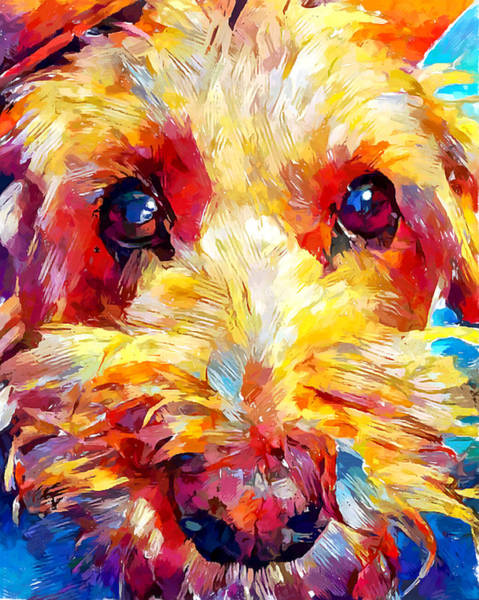 Wall Art - Painting - Schnoodle by Chris Butler