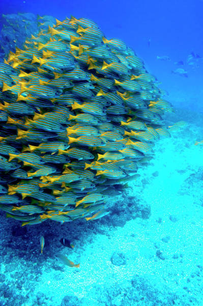 Wall Art - Photograph - School Of Colourful Fish In Blue Waters by Johnny Haglund