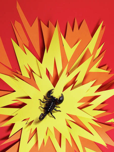 Shock Wall Art - Photograph - Scorpion Sitting In The Middle Of An by Michael Blann