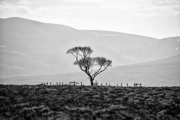 Photograph - Scottish Highland Tree In Black And White by Bill Cannon