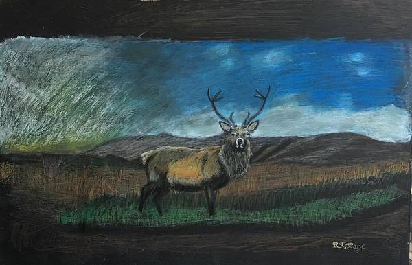 Pastel - Scottish Stag by Richard Le Page