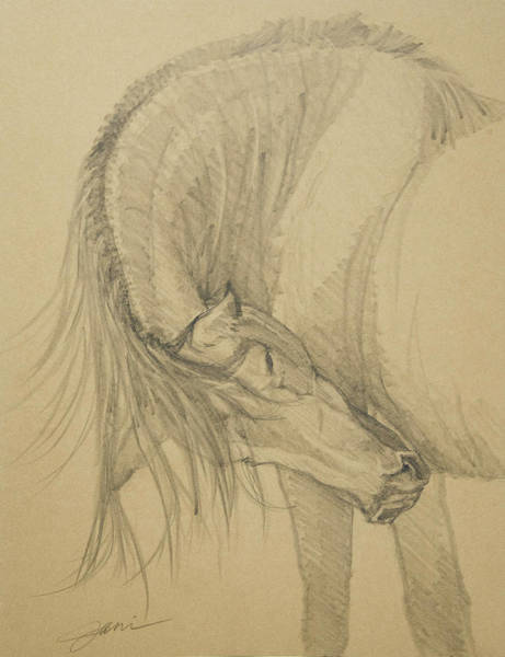 Drawing - Scratching An Itch 2 by Jani Freimann